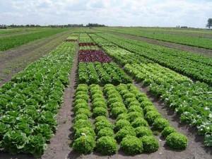 agricultura-organica