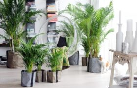 Plantas felices para un año verde