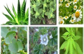 Plantas medicinales, un consumo que aumenta día tras día