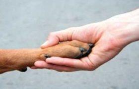 La adopción de mascotas, es una tendencia que está en ascenso