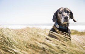 Los dispositivos para monitorear mascotas son tendencia