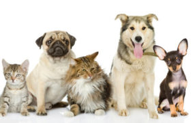Aumenta cada vez más la tendencia a adoptar mascotas