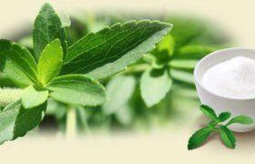 Comer stevia ya es tendencia