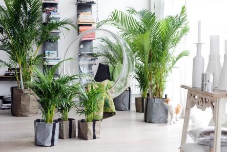 Plantas felices para un a o verde moda hoy - Plantas de interior para salon ...