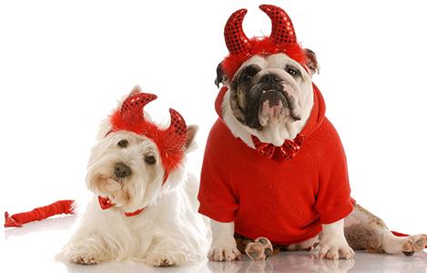 disfraces-caseros-para-mascotas-halloween-20151
